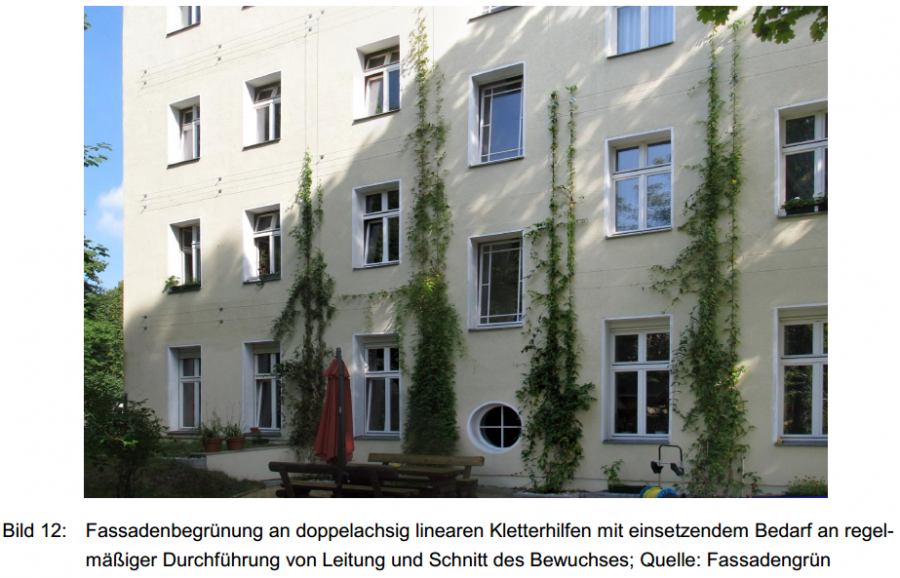 Fassadenbegruenung an doppelachsig linearen Kletterhilfen - Leitung und Schnitt des Bewuchs