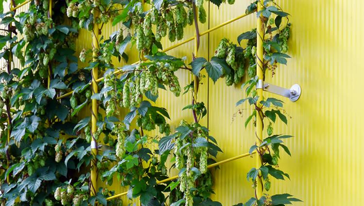Polygrün Fassadenbegrünung Büromarkt Böttcher
