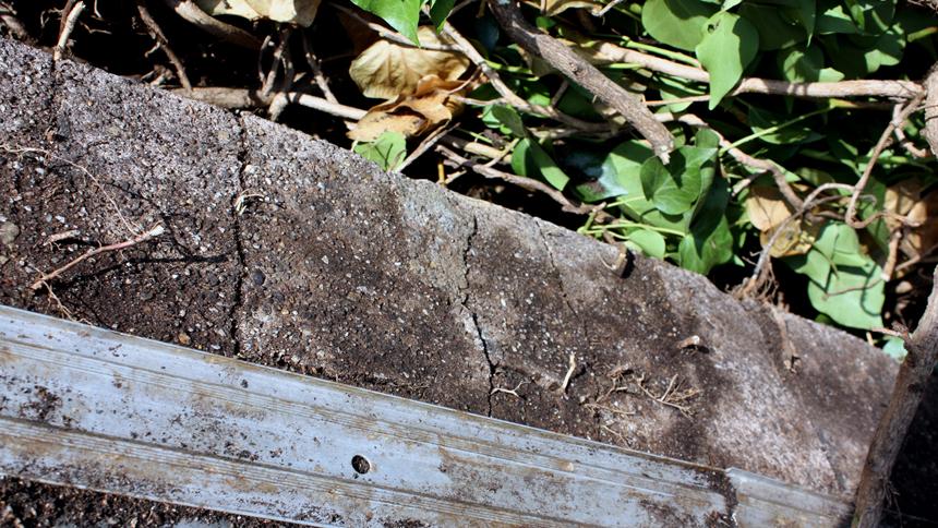 Begrünung Efeu Mauerkrone Haftwurzel Wurzeln Schäden