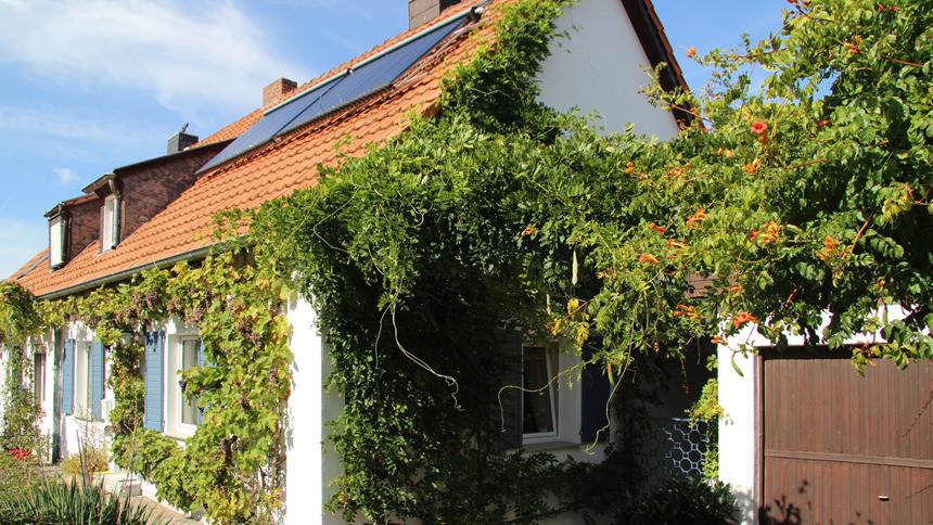 Häufig Fachgerechte Pflege und Wartung bodengebundener Fassadenbegrünung HC41
