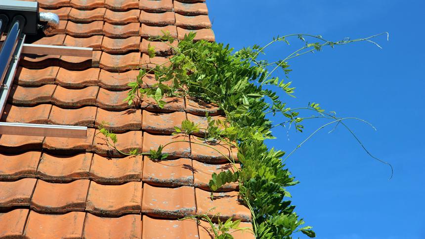 Kletterhilfe Pflege Dach