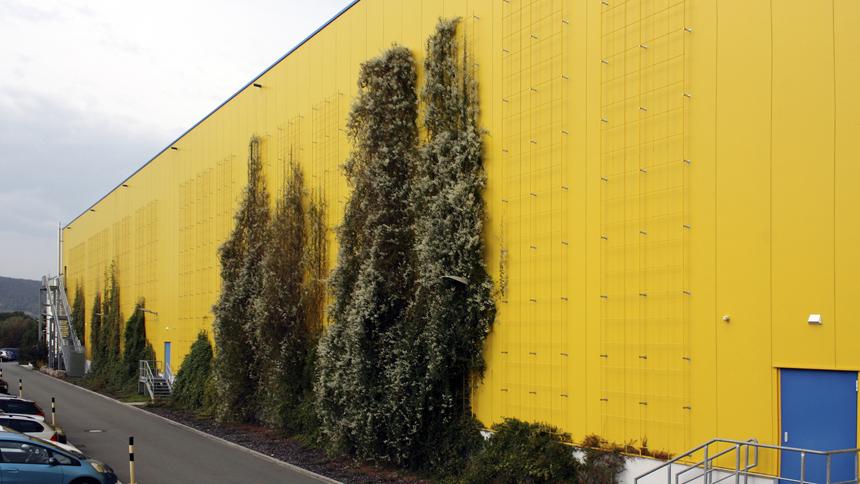 Industriefassade Kletterhilfe Bepflanzung