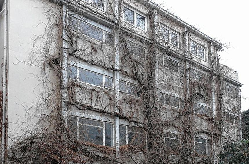 Pflege Fassadenbegrünung