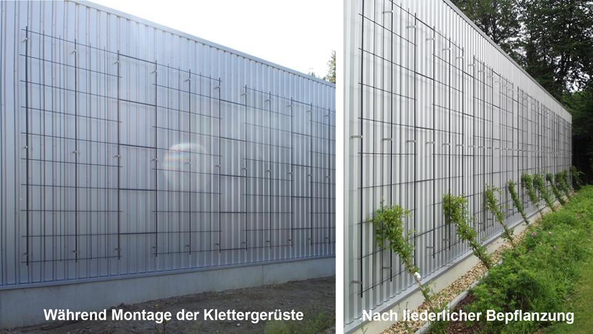 Fassadenbegrünung Bepflanzung