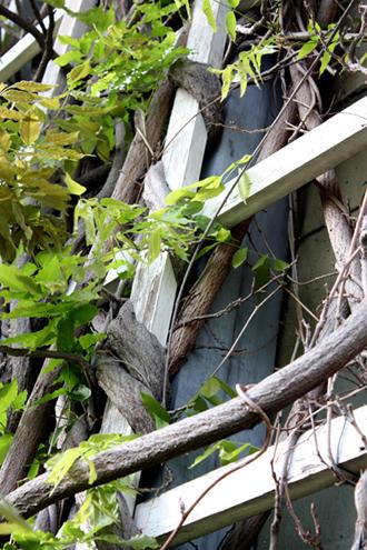 Holzspalier bzw.traditionelles Rankgerüst für Blauregen