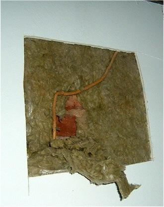 Efeu dringt durch Mauerwerk - einschaliges Ziegelmauerwerk - Bauschaden