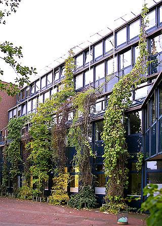 Fassadenbegrünung mit Gerüstkletterpflanzen