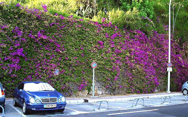 Image 12 - Greened wall in Monaco (comparable to image 11) a few weeks after maintenance