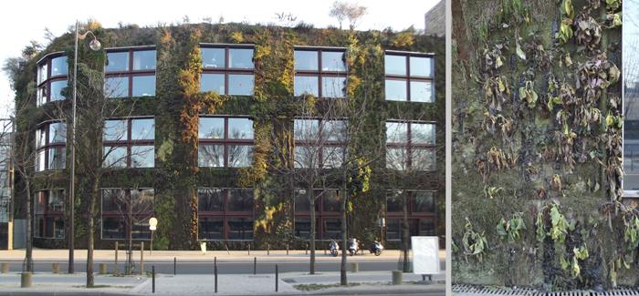 Frostbeständigkeit, bzw. Frostschäden an wandgebundener Fassadenbegrünung