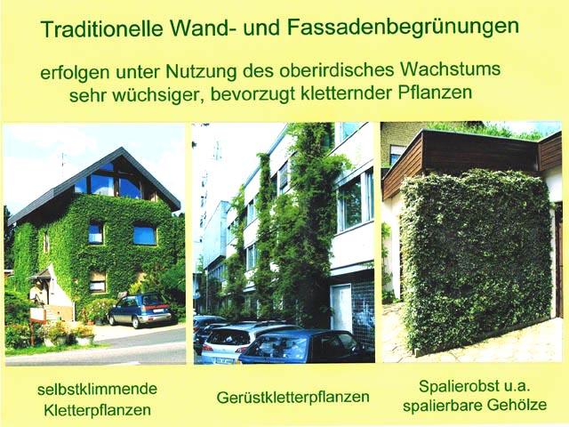 Image 15 – Modalities of traditional façade greening.