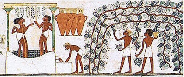 Image 1 - Historical use of climbing plants. Representation of wine producing at the Tomb of Nakht, Theben, 17 c. BC) excerpt of free image database, Source: Wikipedia)