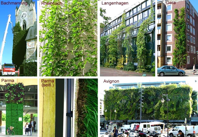 Based on practical experience ... information on the successful implementation of facade greening